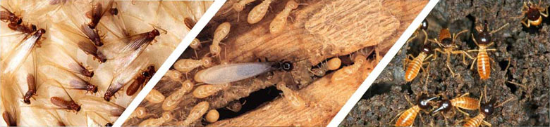 NoTermites - Anti Termite Organic Solution